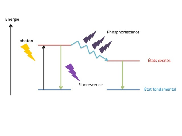 fluorescence et phosphorescence